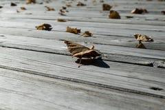 Auf dem Bretterboden sind gefallene Blätter von Gelbem und von Orange Lizenzfreies Stockfoto
