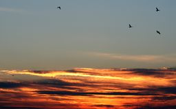 Auf dem Flügel-Sonnenuntergang Stockfotos