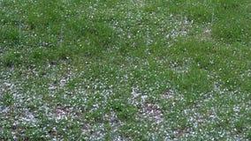 Auf dem grünen Gras des Sommers auf einem bewölkter Tagesfallenden Hagel des Eises Dort ` s ein Sturmkommen stock video