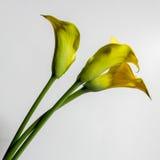 Auf dem lokalisierten gelben Hintergrund Stockbilder