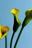 Auf dem lokalisierten gelben Hintergrund Lizenzfreie Stockfotografie