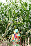 Auf dem Maisgebiet Lizenzfreie Stockbilder