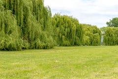 Auf dem Rhein in Deutschland mit einer großen Wand von Silberweidebäumen Lizenzfreies Stockfoto