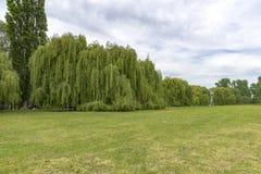 Auf dem Rhein in Deutschland mit einer großen Wand von Silberweidebäumen Lizenzfreie Stockfotos
