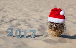 Auf dem Strand im Sand sind die Zahlen von neuem 2017 und die Lügen nahe bei fugu Fisch, der einen Santa Claus-Hut trägt Lizenzfreies Stockfoto