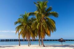Auf dem Strand Playa Giron, Kuba Lizenzfreie Stockfotografie