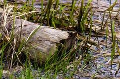 Auf dem Ufer des Sees in einem Park Stockfotografie