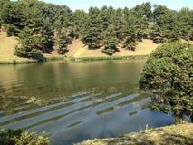 Auf den Flussbankbäumen Stockbilder