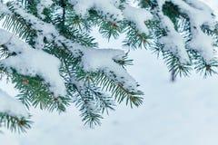 Auf den grünen Niederlassungen der Fichte oder der Kiefer ist schöner weißer Schnee Lizenzfreies Stockfoto