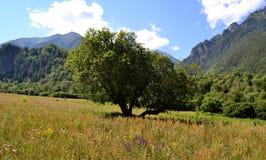 Auf den Nordsteigungen des größeren Kaukasus stockbilder