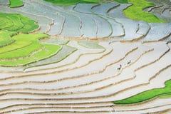 Auf den Reisfeldern des Rohwassers voll pflügen Lizenzfreie Stockbilder