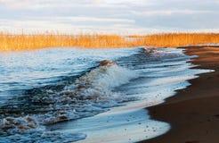 Auf den sandigen Ufern vom Ladogasee im Herbst Stockfoto