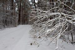 Auf den schwarzen Niederlassungen des Baums liegt ein starkes Schneeschicht lo Lizenzfreie Stockfotografie