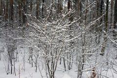 Auf den schwarzen Niederlassungen des Baums liegt ein starkes Schneeschicht lo Lizenzfreies Stockfoto