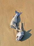 Auf den Strand gesetzte Fische Lizenzfreies Stockfoto