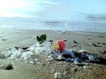 Auf den Strand gesetzte Rose Lizenzfreies Stockfoto