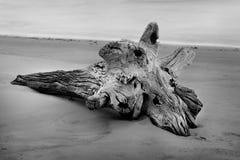 Auf den Strand gesetzter Baum Stockfotografie