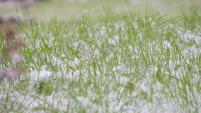 Auf den weißen Schneefällen des grünen Grases stock footage