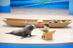 Auf der Bühne Show des Seelöwes mit seinem Trainer durchgeführt an Hong Kong Ocean Park-Theater lizenzfreie stockfotos