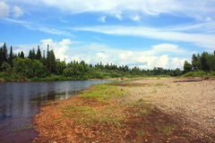 Auf der Bank des taiga Flusses Stockfotos