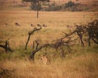 Auf der Jagd stockbild