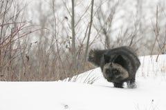 Auf der Jagd am vorsichtigen Morgen Stockfoto