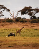 Auf der Savanne stockfotos