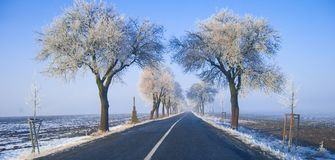 Auf der Straße mit gefrorenen Bäumen Lizenzfreies Stockfoto