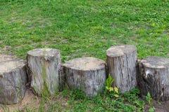 Auf der Wiese mit grünem Gras gibt es fünf Stümpfe unterschiedliche Höhe und Stärke Lizenzfreie Stockfotos