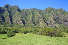 Auf der Wiese von Kualoa-Ranch Lizenzfreies Stockfoto