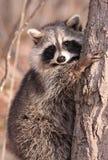 Auf einem Baum Stockfotografie