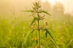 Auf einem grünen Rasen am frühen nebeligen Morgen stockbilder