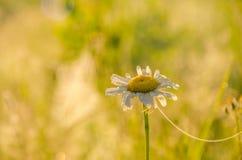 Auf einem grünen Rasen am frühen nebeligen Morgen stockbild