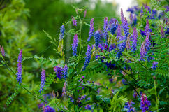 Auf einem grünen Rasen am frühen nebeligen Morgen lizenzfreies stockfoto