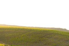 Auf einem Hintergrund eines Hügels Lizenzfreies Stockbild
