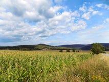 Auf einem Hintergrund eines Hügels Stockfotos