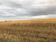 Auf einem Hintergrund eines Hügels Stockfoto
