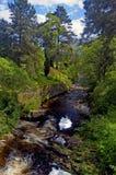 Auf einem schottischen Riverbank Stockbild