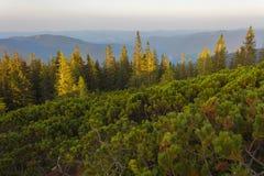 Auf einem Sommer die Identifikation vom Berg glättend Stockfotos