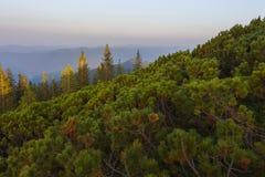 Auf einem Sommer die Identifikation vom Berg glättend Lizenzfreie Stockfotos