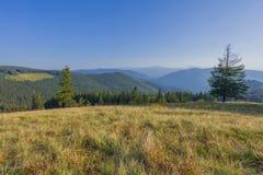 Auf einem sonnigen Sommertag, auf der Ansicht von der Hochebene zum Wald und auf den Bergen Blauer Himmel, viele grünes Gras und  Lizenzfreies Stockfoto