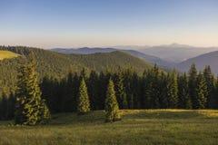 Auf einem sonnigen Sommertag, auf der Ansicht von der Hochebene zum Wald und auf den Bergen Blauer Himmel, viele grünes Gras und  Stockfoto