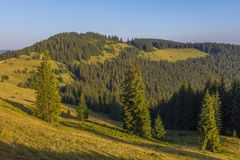 Auf einem sonnigen Sommertag, auf der Ansicht von der Hochebene zum Wald und auf den Bergen Blauer Himmel, viele grünes Gras und  Stockbild