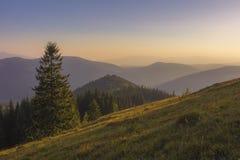 Auf einem sonnigen Sommertag, auf der Ansicht von der Hochebene zum Wald und auf den Bergen Blauer Himmel, viele grünes Gras und  Lizenzfreies Stockbild