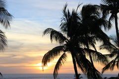 Auf einem Strand Sea Sand schaukelt Hawaii-Natur sonniges Palmepool lizenzfreie stockfotos