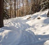 Auf einem Weg durch einen Winterwald Stockfotos