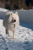 Auf einer Schneespur Lizenzfreie Stockfotografie