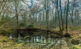 Auf einer Wegabflussrinne der Wald Lizenzfreie Stockfotos