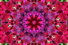 Auf lagerbild des Petunie-Kaleidoskops Stockfotos