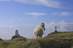 Auf Llanddwyn Insel Lizenzfreies Stockfoto